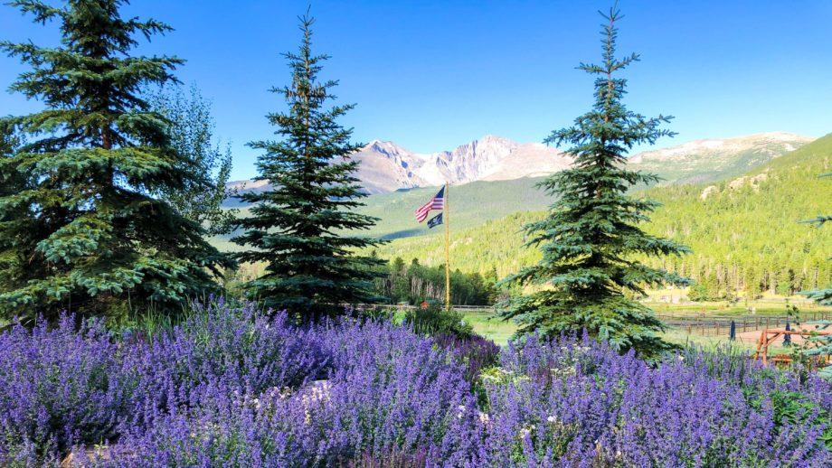 Mountain landscape with purple flowers