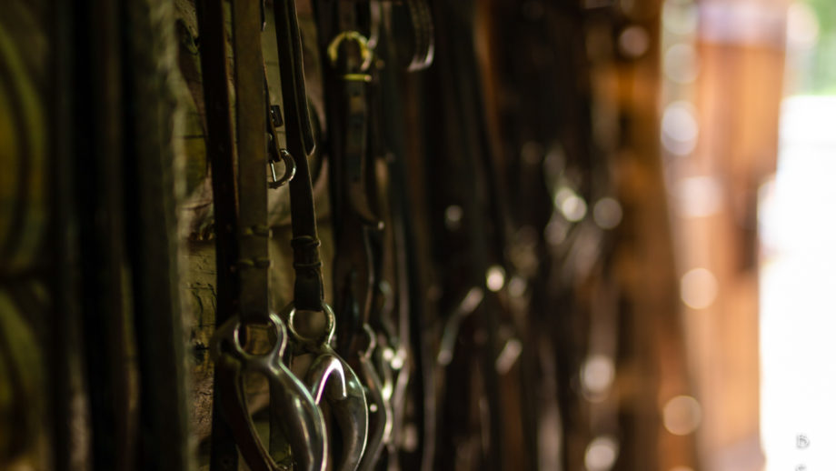 Buckles for a horse ini a barn.
