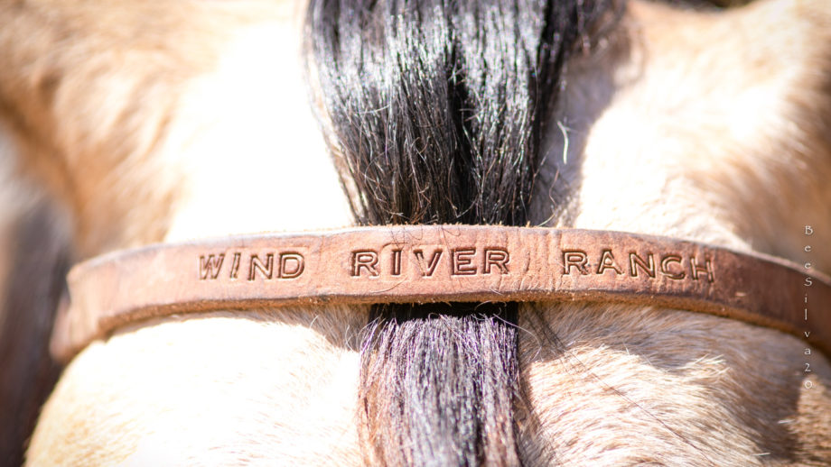 """A closeup of a horse with """"Wind River Ranch"""" written on the saddle."""