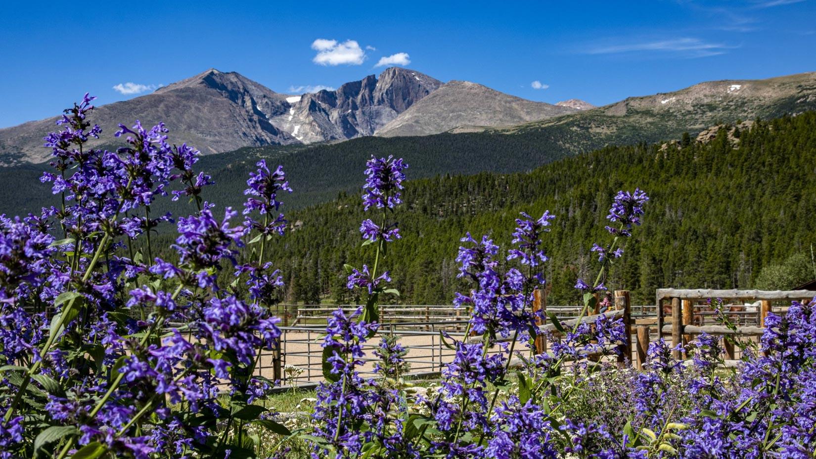Bright purple flowers and a mountainous landscape.