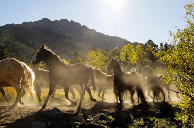 Horses running at dusk.